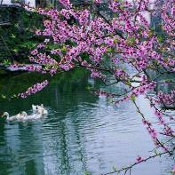 《三月》-碑林路人由蓝精灵演唱(原唱:碑林路人)