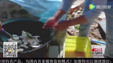 《钩尖江湖》第十五期 游钓乌苏镇 - 腾讯视频