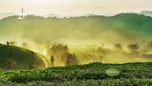 龙坞问茶诗 茶与时间的风景