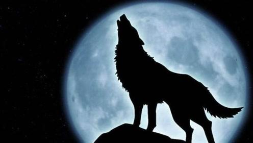 等了17年,华尔街的狼终于来了!