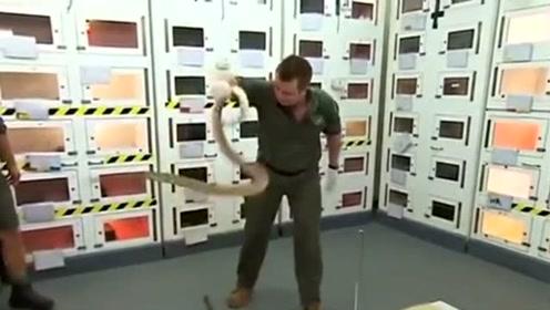 澳洲动物园现最毒蛇 一口毒液足杀百人