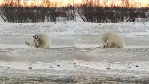 一只撸狗的北极熊:你感不感动呀!狗子:不敢动不敢动!