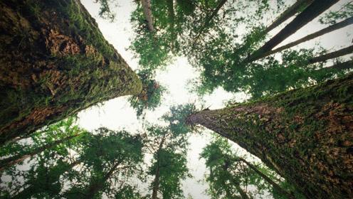 她研究森林30年发现惊人秘密:树会彼此间说悄悄话