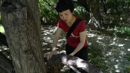 传说中的世外桃源居然在西藏林芝,堪比法国波尔多葡萄园