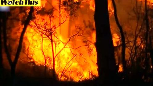 澳大利亚突发森林大火 逼近悉尼火势凶猛濒临失控