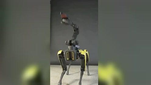 波士顿动力机器狗也会跳舞?动感十足令人惊叹