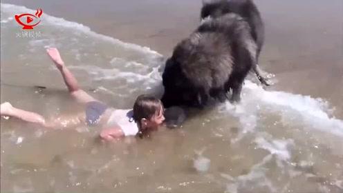 汪星人以为小女孩溺水 它的举动暖哭了旁人
