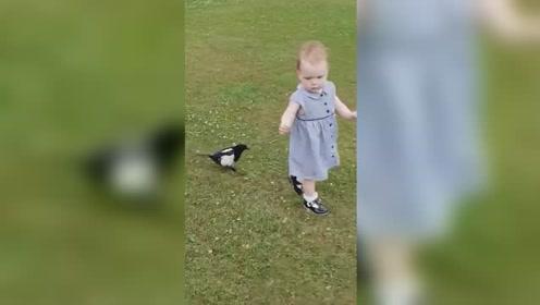 英国一喜鹊追逐蹒跚学步女童 欢乐嬉戏