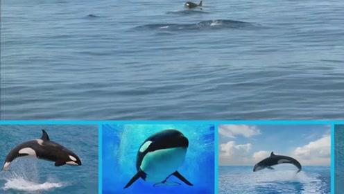 海洋动物介绍认识大龙虾小海豚玩具