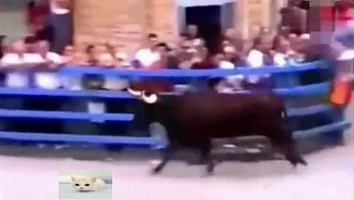 斗牛场上疯跑的牛,突然发现喂它的老饲养员,瞬间温柔如初恋