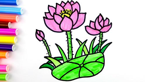 夏天的荷花简笔画,儿童基础简笔画花卉