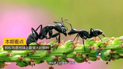 若蚂蚁组成超级蚁群,将是地球最强大物种,甚至会对人类造成威胁