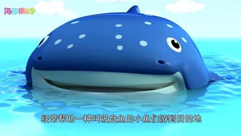 自然小课堂-吸盘鱼和鲸鲨