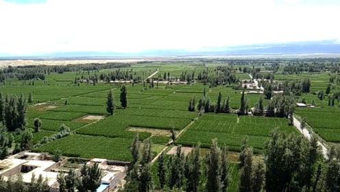 """中国最没面子的沙漠,只剩200多亩,每年还要靠人工填沙""""保命""""!"""