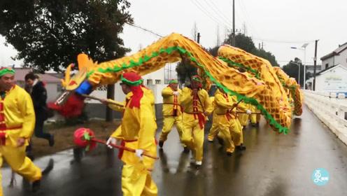 传承600多年的巨村巨龙,100多人协同舞动200米长龙,盛况空前