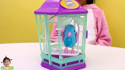 《苏菲娅玩具》艾米儿带来了可爱的玩具小鸟!