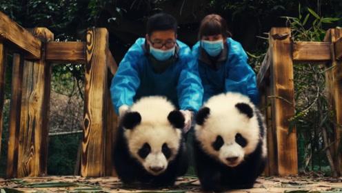 """世界上唯一不属于中国的大熊猫,这辈子都不能回""""娘家""""了!"""