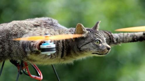 会飞的猫咪你们见过吗?男子对已故猫咪的爱,把猫咪做成了无人机