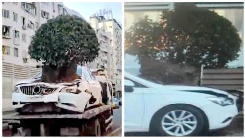 司机驾车打虫子撞上隔离带,绿化树卡引擎盖上笑哭路人