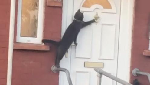 """最有礼貌的猫!曾多次""""敲门""""被路人拍下"""