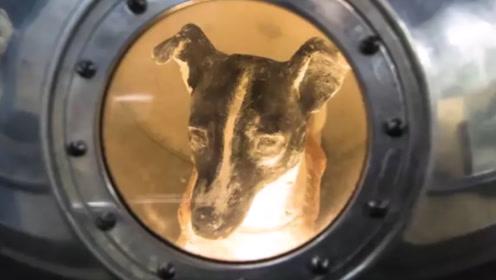 世界上最孤独的狗,被人类送入太空实验,至今没能返回地球