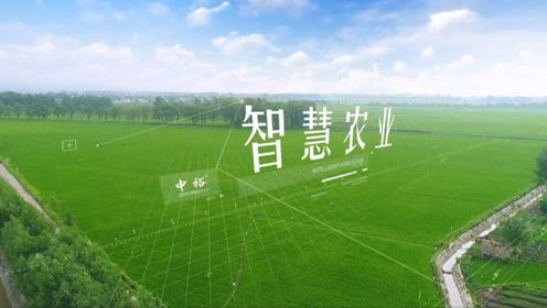 中裕小麦循环经济产业链