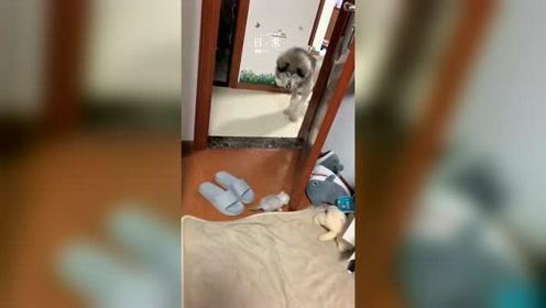 狗子:我其实并没有恶意