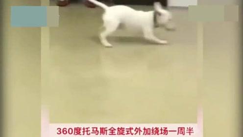 """狗狗每天在电梯口等主人,突然开始""""蹦迪"""""""