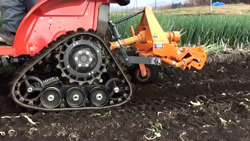 看看日本农民是怎样来收割大葱的,这机械设备真先进