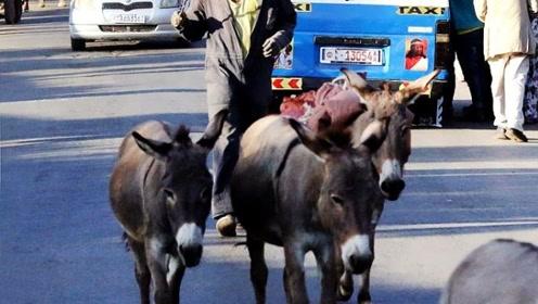 史上最难定责车祸:驴把奥迪给踢了,可肇事者明明是狗!
