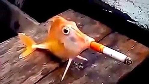 老外作死实验,竟叫自家金鱼抽烟,下一秒发生意想不到的事!