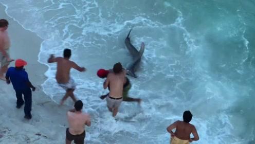 女子在海边游泳,不料被鲨鱼狂追上岸,镜头拍下惊险画面令人后怕