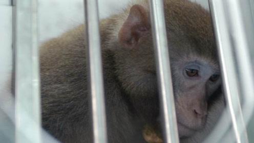 美军被曝用动物做埃博拉病毒实验,似要研究生物武器