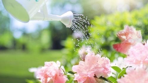用了淘米水没效果?加点料变成复合肥,肥效增10倍,啥花都长势