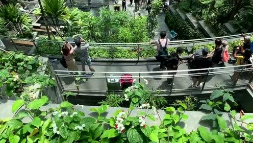 很难想象这是飞机场,犹如置身热带雨林当中