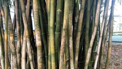 素质呢?陕西一4A景区竹林被刻字毁容,一根竹上达数十字