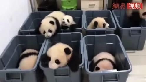 晃晃悠悠下载_大熊猫宝宝晃晃悠悠的学走路,一晃一晃的太萌了