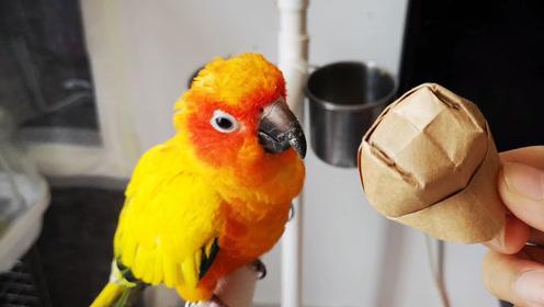 突如其来的帽子,鹦鹉强烈反对,身形矫健的躲开帽子兽全部攻击