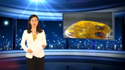 生物学家发现1亿年前古老琥珀,40多个生物蜗居其中
