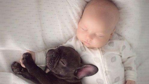 为什么不要将狗狗和宝宝放一起?看看狗狗的下场后你就知道了