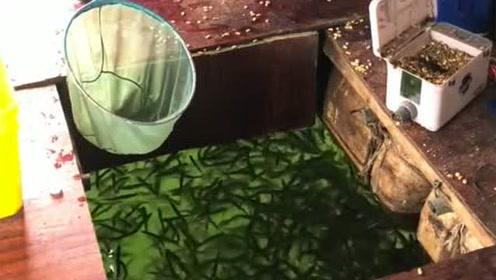 这捕鱼方法真是妙,趁鱼不注意一网打尽,网友:吓我一跳