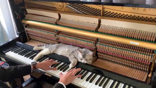 国外一男子弹了一辈子琴也没啥名气,却因为自家的猫火了