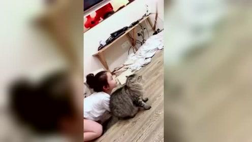 猫咪才是人类的好朋友,为保护小主人,连大狗都敢揍!