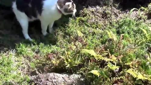 猫:你给我出来,蛇:打死我也不出去