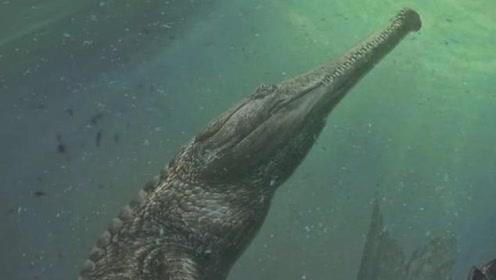 君王马奇莫鳄有多强悍?仅头骨就有1.6米长,连鲸龙都被它咬过