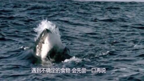 无人机拍下惊险一幕!男子游泳与鲨鱼擦肩而过,双方都很淡定