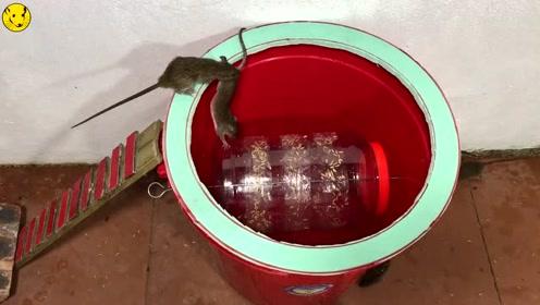 一个水桶外加一个塑料瓶,做成的捕鼠器太实用了,真是天才发明
