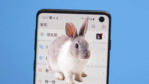 """教你在手机里养一只""""宠物兔"""",可爱又通人性,快去领养一只"""