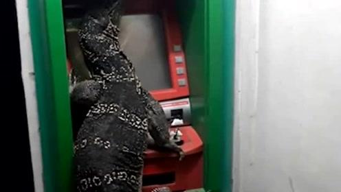 """泰国网友到ATM排队提钱时 发现上面趴着一只大""""巨蜥"""""""
