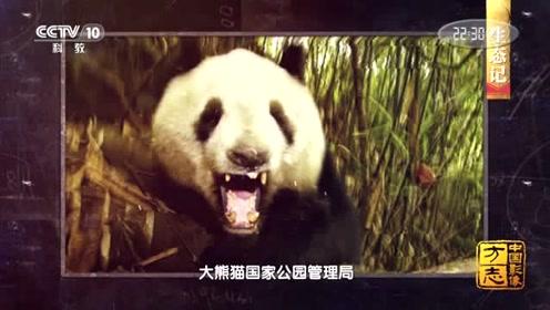 """中国影像方志丨大熊猫保护等级已从""""濒危""""降为""""易危"""""""